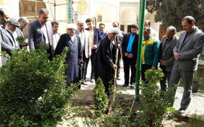 """به مناسبت روز درختکاری؛ اجرای طرح """"طاعت و طبیعت"""" در بقاع متبرکه فین"""
